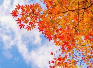 چرا پاییز پادشاه فصل ها است؟