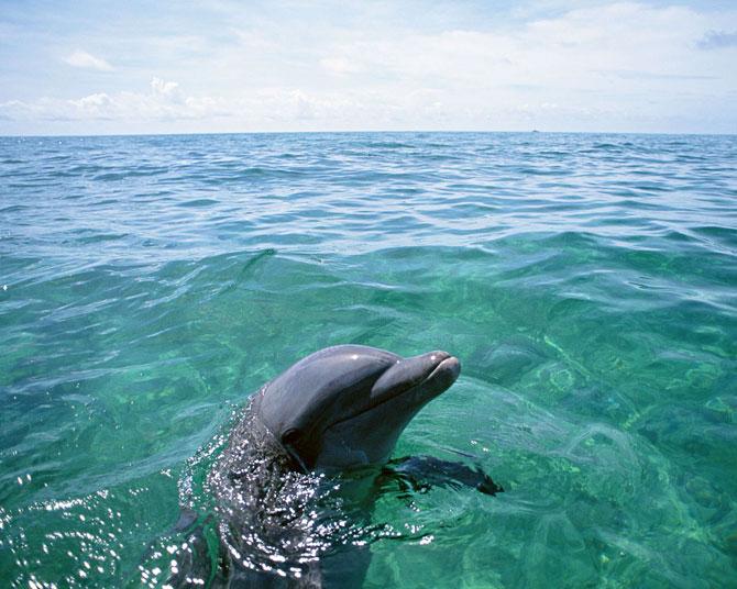 عکس پروفایل دلفین