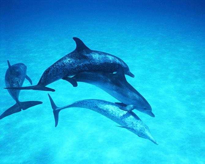 تصاویر با کیفیت دلفین