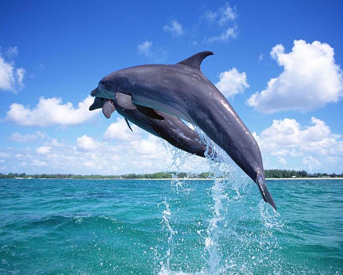 عکس پرش دلفین در دریا