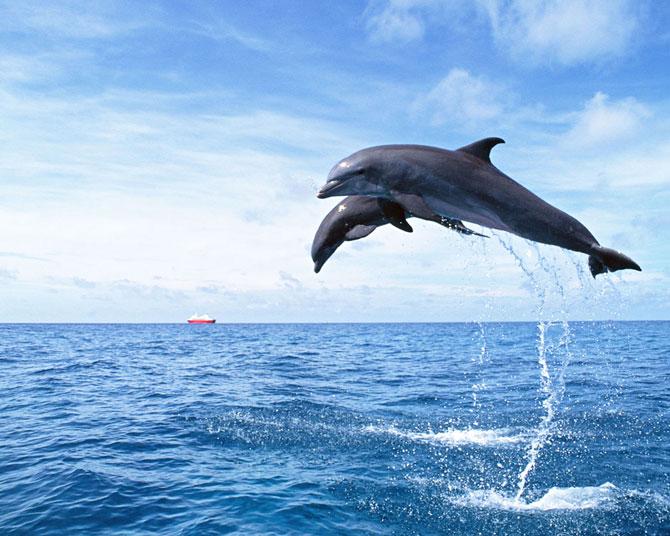 عکس زیبا از دلفین ها