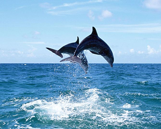 عکس دلفین های دریا