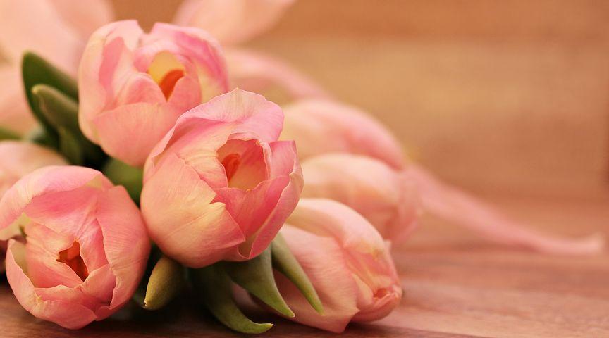 عکس گل لاله قشنگ
