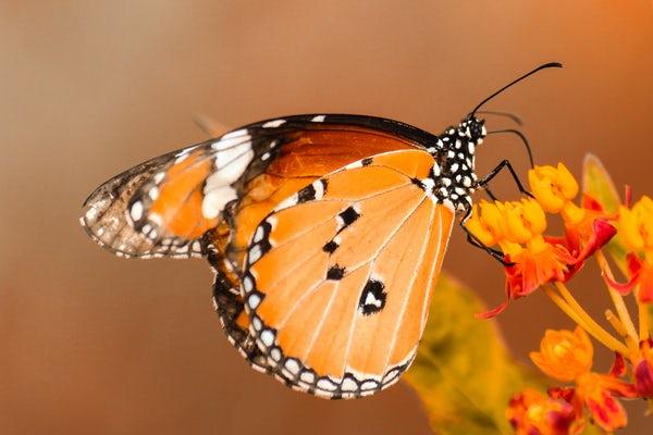 تصاویر پروانه زیبا