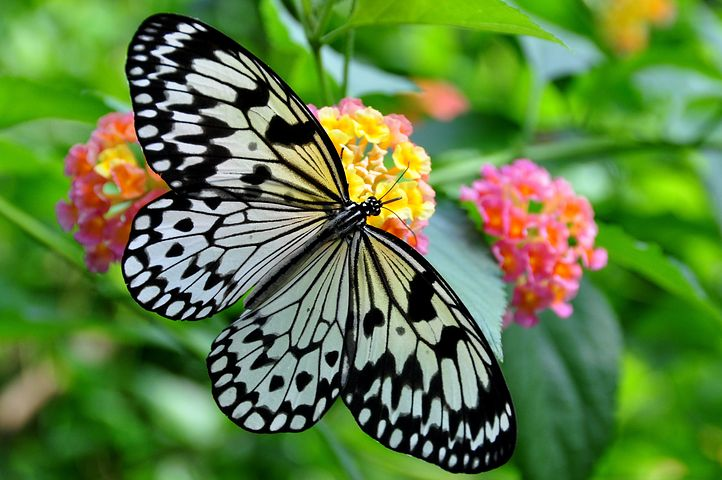 عکس پروانه و گل زیبا