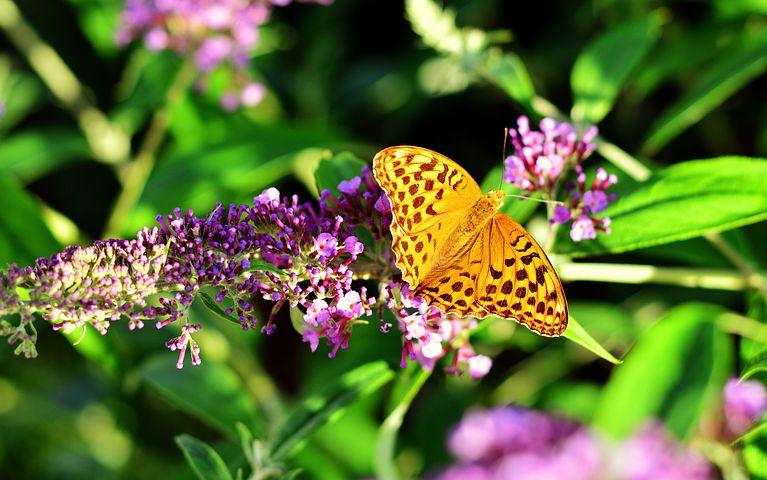 عکس پروانه زرد