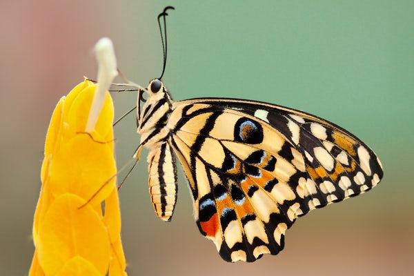 عکس پروانه های زیبای جهان