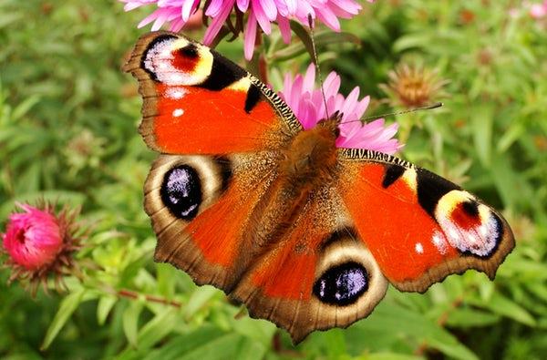 عکس پروانه های رنگی و زیبا