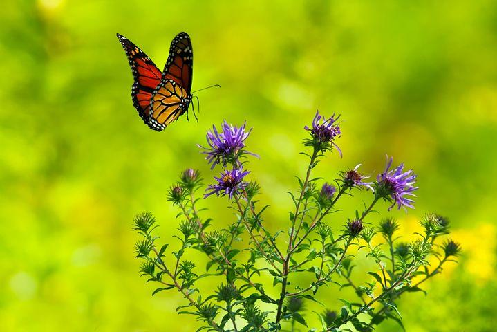 عکس پروانه قشنگ با کیفیت بالا