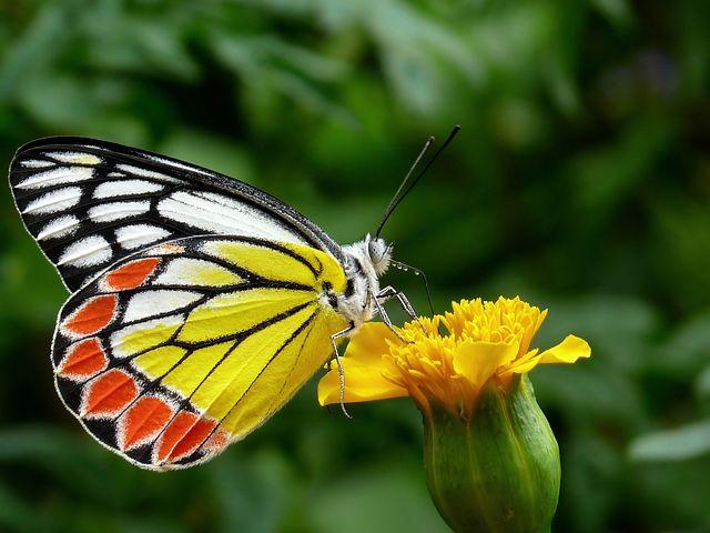 عکس پروانه و گل زیبا برای پروفایل