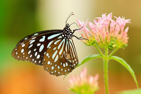 عکس زیباترین پروانه های دنیا