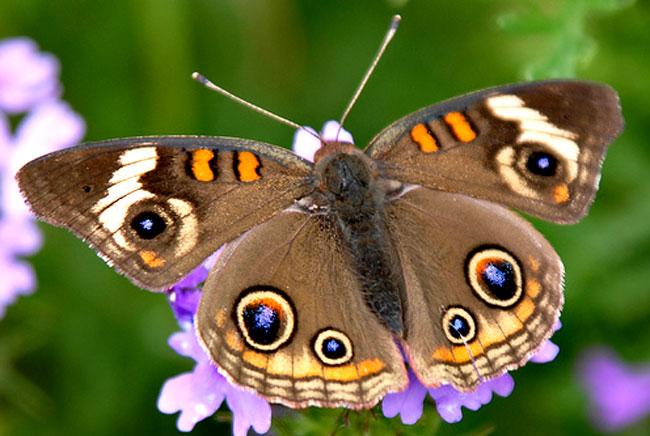 عکس پروانه با کیفیت بالا