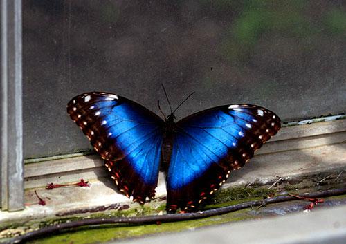 عکس پروانه خوشگل