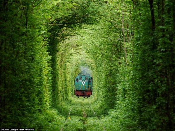 یک ترن از میان خط آهن تونل عشق عبور می کند.