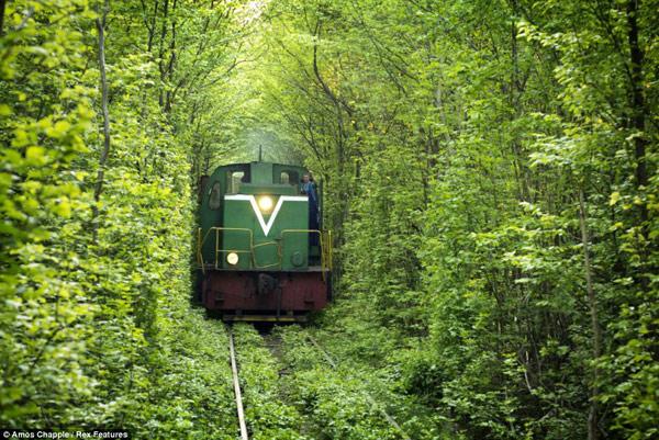این تونل در واقع یک مسیر 3 کیلومتری از راه آهن خصوصی است که در حال سرویس دهی به یک کارخانه فیبر تخته در همان نزدیکی هاست.
