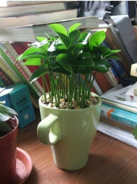 رشد نهال های جوان در گلدان