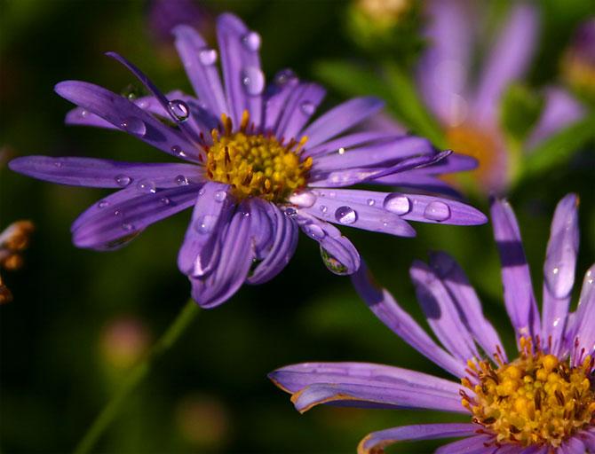 طبیعت زیبای گل و گیاهان