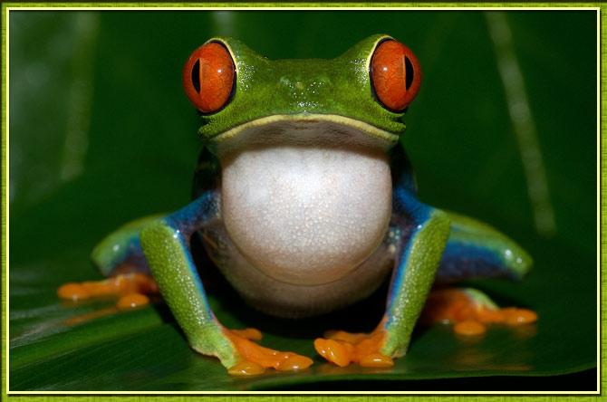 http://www.coca.ir/wp-content/uploads/2013/02/frogs-13.jpg
