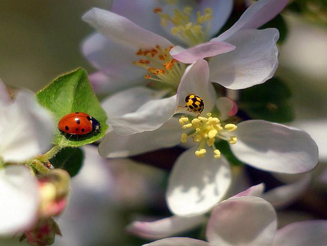 شکوفه گل