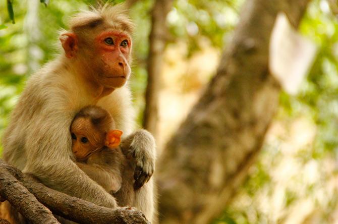 بچه میمون