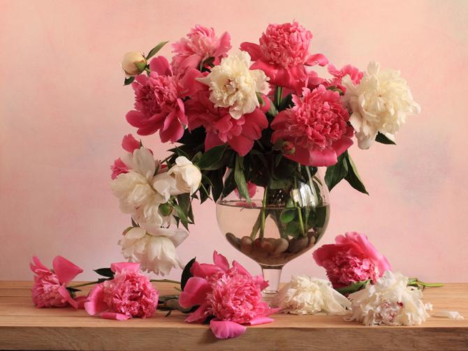 عکس+گل+گلدان