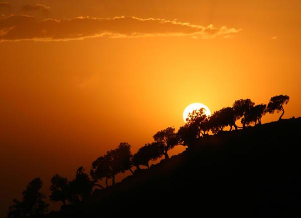 گروه اینترنتی خورشید - khorshidgroup.org