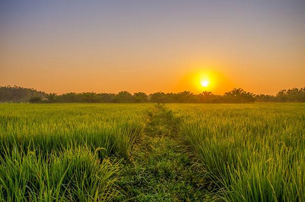 تصاویر طلوع آفتاب در طبیعت