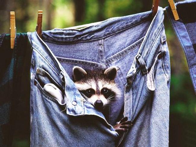 عکس های خنده دار حیوانات