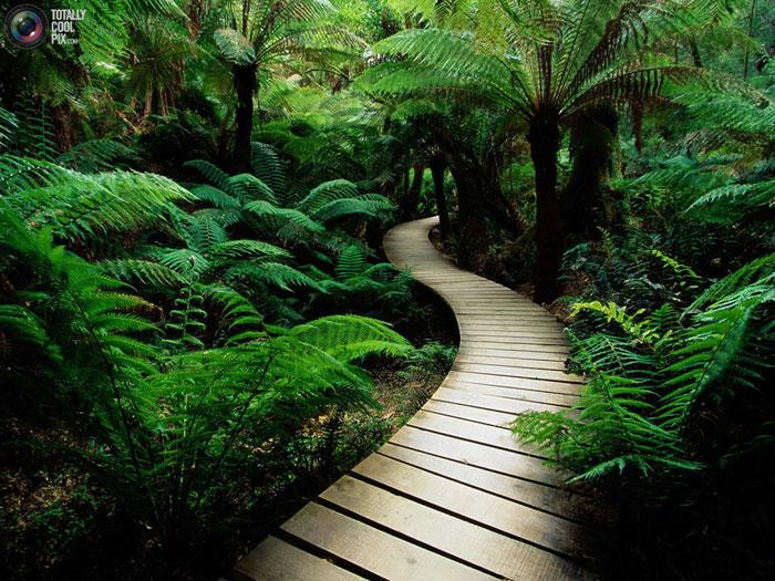 طبیعت شگفت انگیز