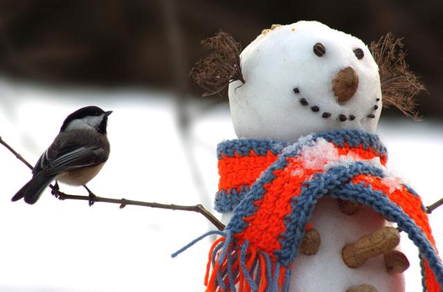 آدم برفی زیبای زمستان