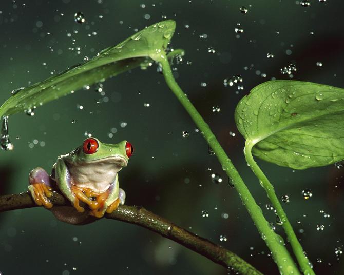 بارش باران در طبیعت
