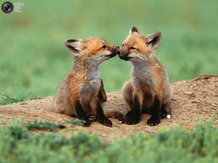 دانلود عکس حیوانات زیبا