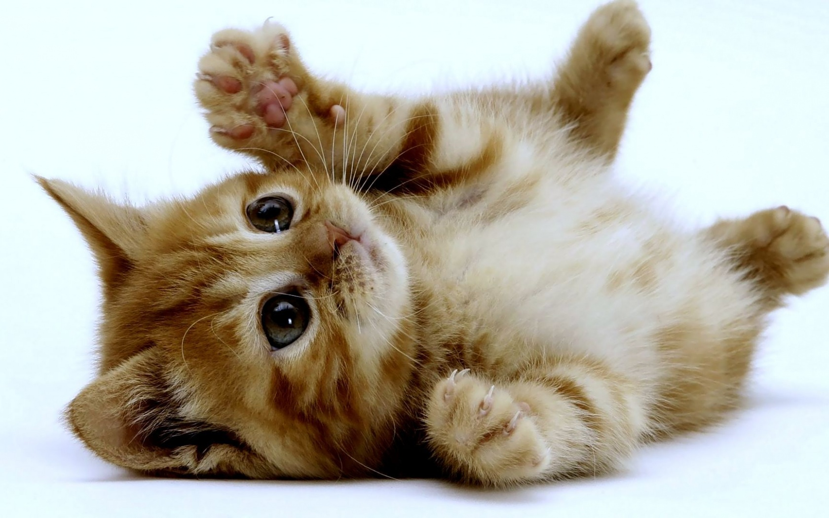 مراقب چنگ زدن گربه باشيد