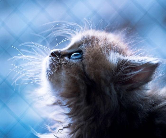بامزه ترین بچه گربه جهان