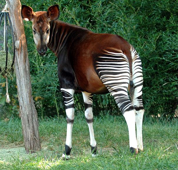 حیوانات عجیب