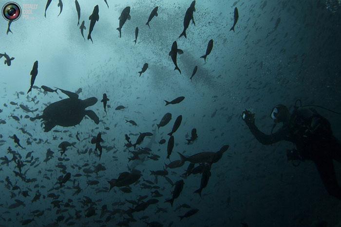 جانوران شگفت انگیز جزایر گالاپاگوس