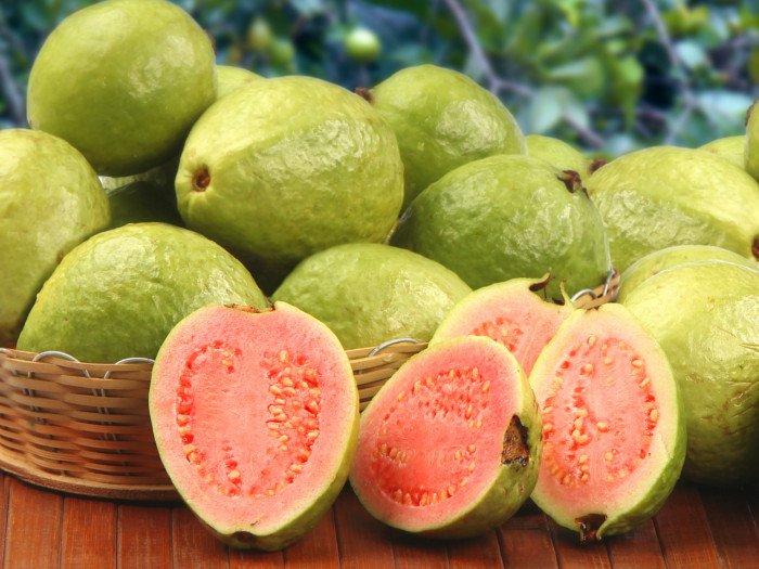 عکس و خواص میوه گواوا یا زیتون محلی بندرعباس