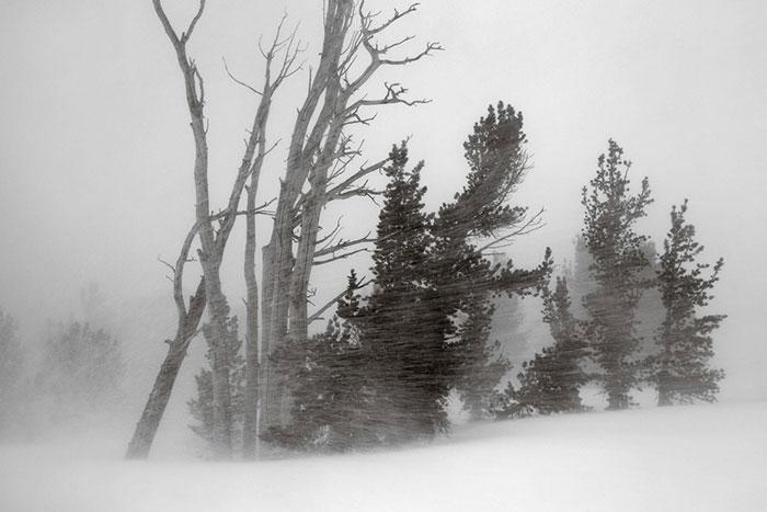 عکس طبیعت سیاه و سفید
