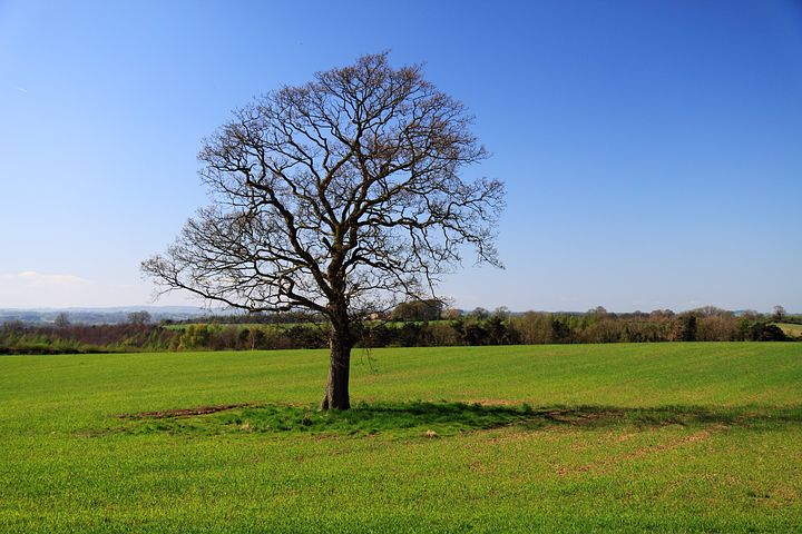 عکس پروفایل درخت تنها