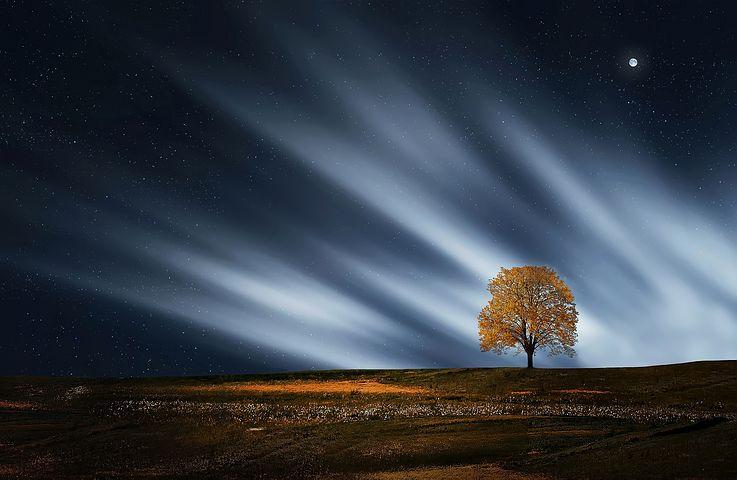عکس تک درخت پاییزی برای پروفایل