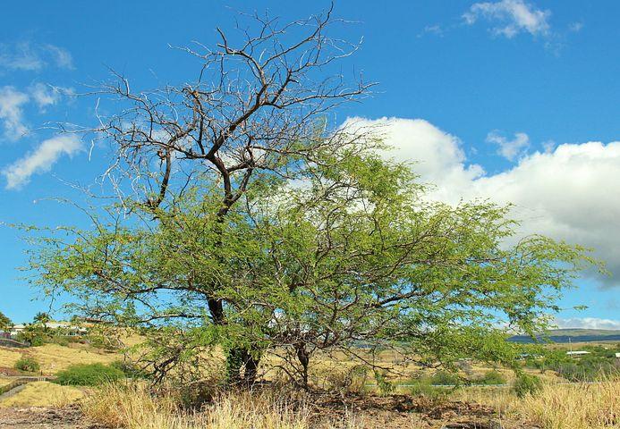 عکس تک درخت در بیابان