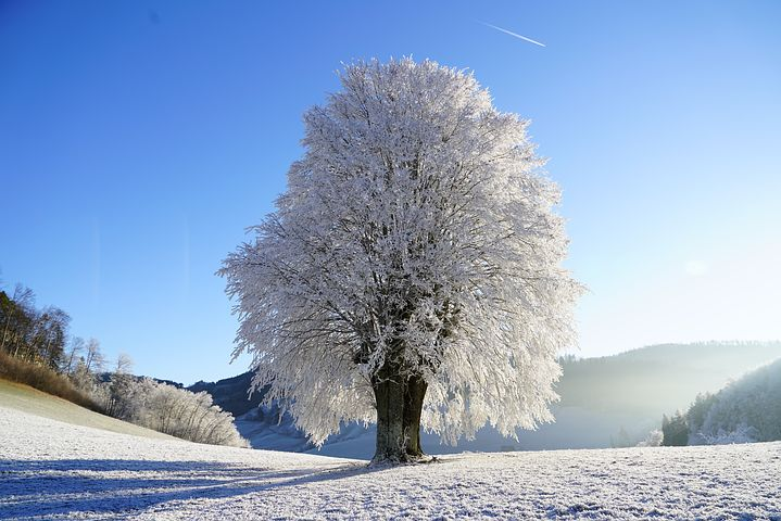 عکس درخت زمستانی تنها برای پروفایل