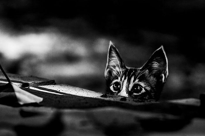 عکس های سیاه و سفید از زندگی اسرار آمیز گربه ها