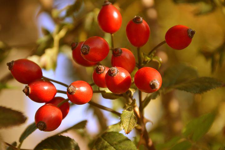 میوه های سرشار از ویتامین ث