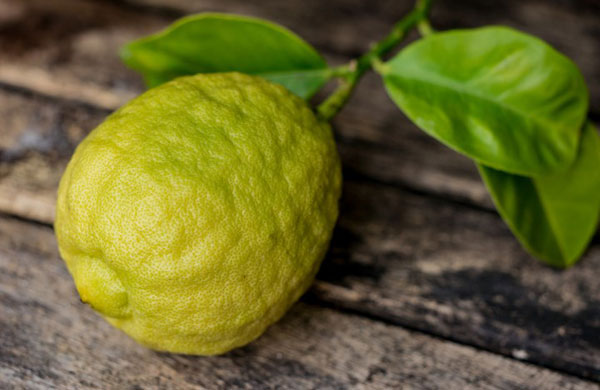 خواص میوه ترنج