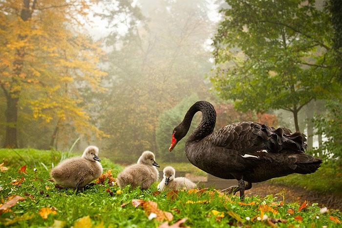 عکس های زیبا و رویایی از فصل پاییز