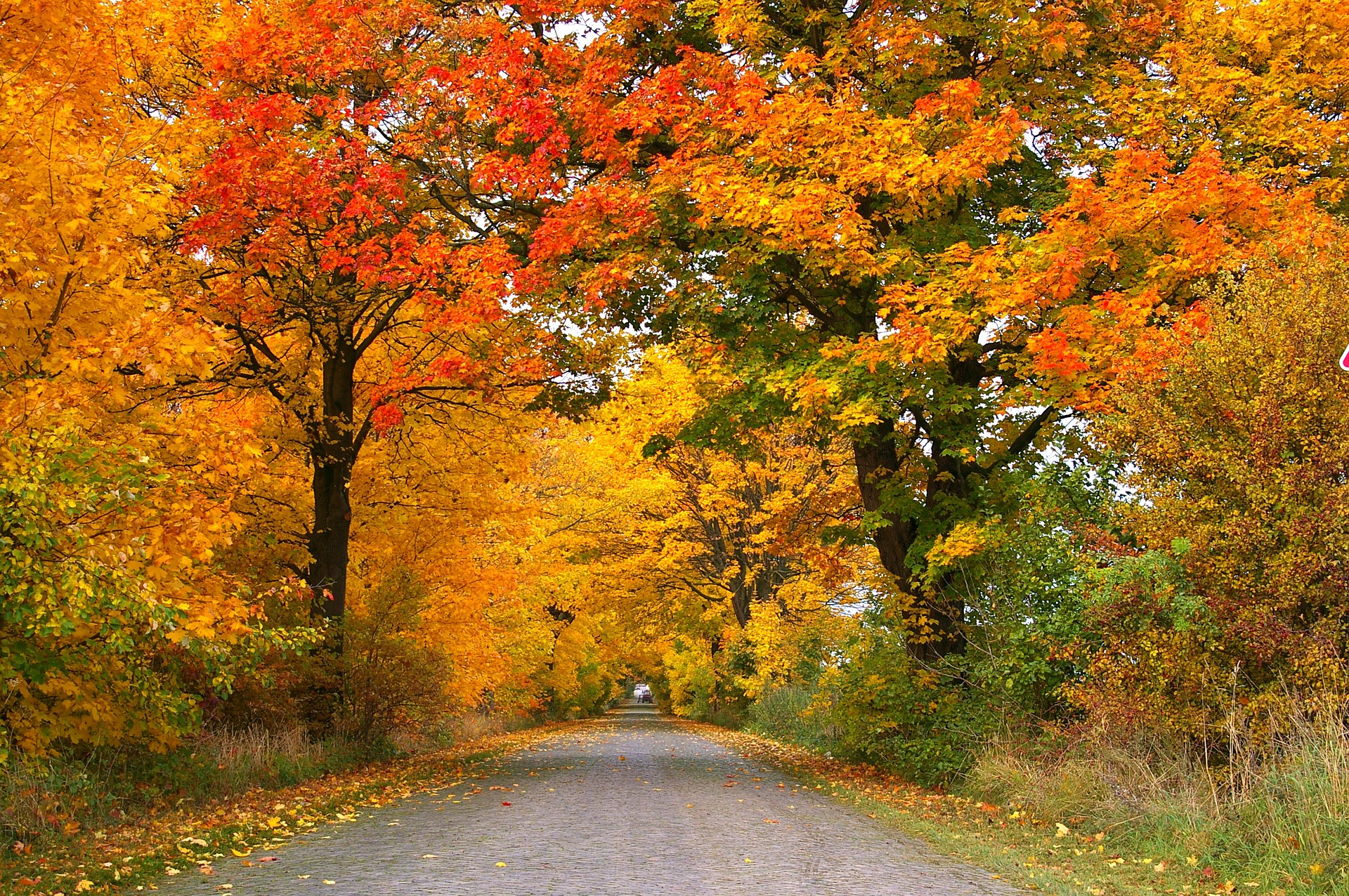 تصاویر زیبا از پاییز با کیفیت بالا