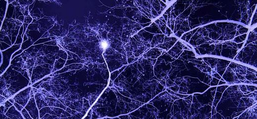 پیامدهای پیشرفت تکنولوژی برای مغز مثبت بوده یا منفی؟