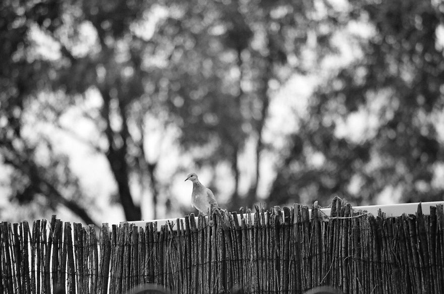عکس های سیاه و سفید زیبا و دیدنی از طبیعت