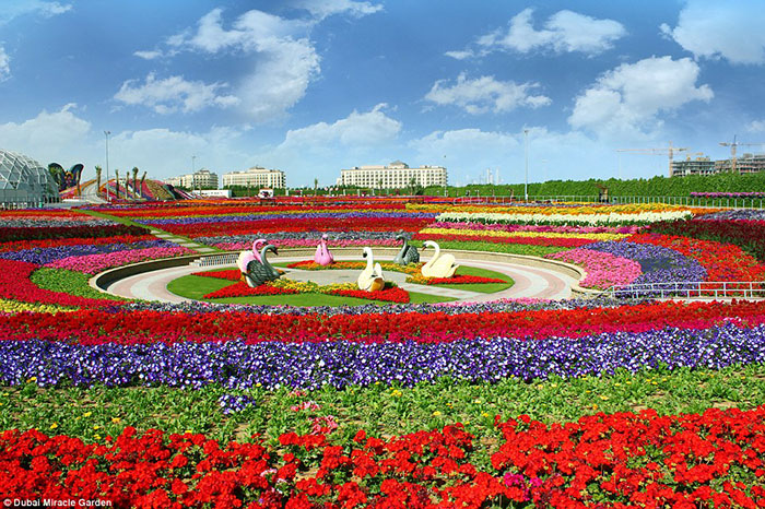 باغ Dubai Miracle Garden، بزرگترین باغ گل دنیاست. این باغ در یک چهارم شمال غربی مرز مراتع دامداری Arabian Ranches واقع شده است.